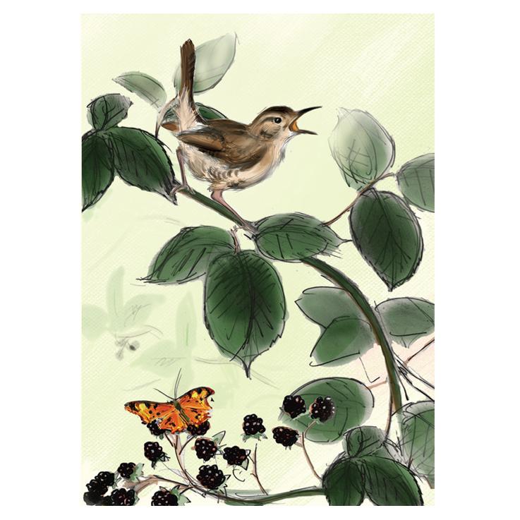 The Wren card by Julian Williams